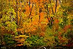 A Autumn day around central Park New York