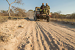 African Lion (Panthera leo) trackers, Timbo Frackson and Christopher Muduwa, with biologist Jake Overton, looking at female tracks during transect, Kafue National Park, Zambia
