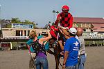 SEP 3,2014:Reneesgotzip,ridden by Edwin Maldonado,wins the C.E.R.F. Stakes at Del Mar in Del Mar,CA. Kazushi Ishida/ESW/CSM