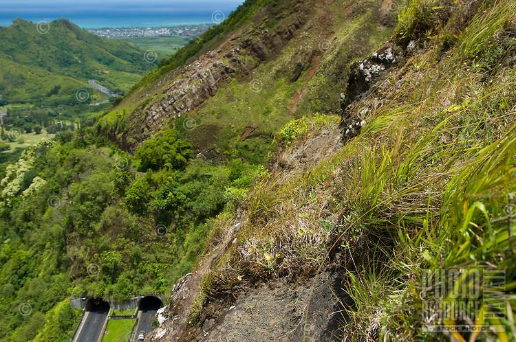 Kawelu, a native Hawaiian grass, grows near the Pali Lookout on O'ahu.