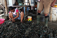 A woman cleans freshly caught mussels in the port area of Jakarta.<br /> <br /> To license this image, please contact the National Geographic Creative Collection:<br /> <br /> Image ID:  1588012<br />  <br /> Email: natgeocreative@ngs.org<br /> <br /> Telephone: 202 857 7537 / Toll Free 800 434 2244<br /> <br /> National Geographic Creative<br /> 1145 17th St NW, Washington DC 20036