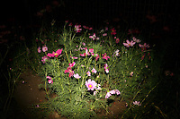 CHINA. Beijing. Flowers. 2008