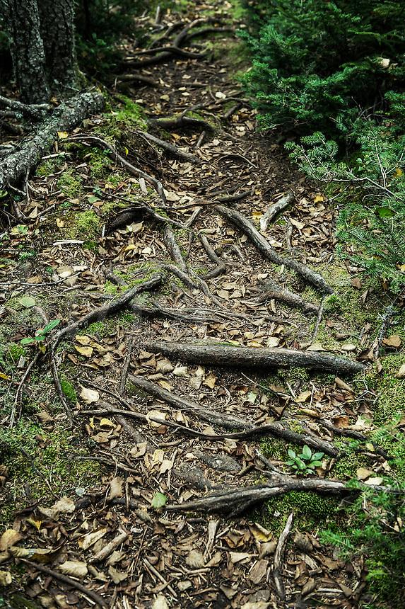 Hiking trail, Acadia National Park, Maine, USA, USA