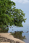 Tetepare Island, Solomon Islands; tree branches filled with green leaves reflecting in the calm shallow waters along the shoreline