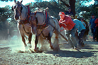 James W. Seavey and his horse pulling team at Deerfield Fair, New Hampshire. Photograph by Peter E. Randall