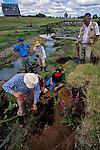 DOH, The Most Ancient Americans, Chinchihuapi Creek, Seasonal home, Hunter Gatherers, Monte Verde, Chile, Tom Dillehay,.
