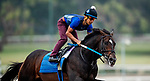 October 22, 2021: Silver State works out in preparation for the Breeders CupDirt Mile at Santa Anita Park in Arcadia, California on October 23, 2021. Evers/Eclipse Sportswire/CSM
