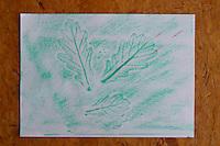 Fertige Blatt-Abdrücke von Eiche, Kinder, Kind machen Abdruck Blatt,  dazu wird ein Blatt weißes Papier das Laubblatt eines Baumes gelegt und mit Wachsmalstiften abgerubbelt. Unterschiedliche Blätter ergeben unterschiedliche Abdrücke