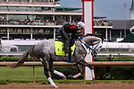 LOUISVILLE, KY - MAY 04: Creator (Tapit x Morena, by Privately Held) gallops in front of the Dawn at the  Downs crowd at Churchill Downs, Louisville KY, ridden by Abel Flores. He is pointed toward the Kentucky Derby. Owner WinStar Farm LLC. (Photo by Mary M. Meek/Eclipse Sportswire/Getty Images)