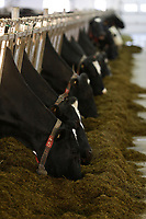 Dairy farm in Quebec province of Canada. File photo
