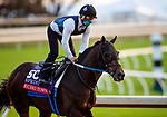 November 1, 2020: Echo Town, trained by trainer Steven M. Asmussen, exercises in preparation for the Breeders' Cup Sprint at at Keeneland Racetrack in Lexington, Kentucky on November 1, 2020. Alex Evers/Eclipse Sportswire/Breeders Cup /CSM