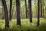 New Jersey Pinelands National Reserve, Berkeley, NJ, USA