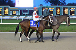 January 16, 2016: Uncle Walter with Miguel Mena up in the Lecomte Stakes in New Orleans Louisiana. Steve Dalmado/ESW/CSM