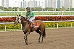 30 January 2010: Sunshine Millions Turf Fearless Eagle (Paco Lopez) at Gulfstream Park in Hallandale Beach, FL.