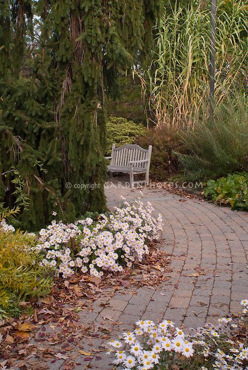 Chrysanthemum Korean Single, pale pink with garden bench in autumn fall scene, Amsonia tabernaemontana var. salicifolia