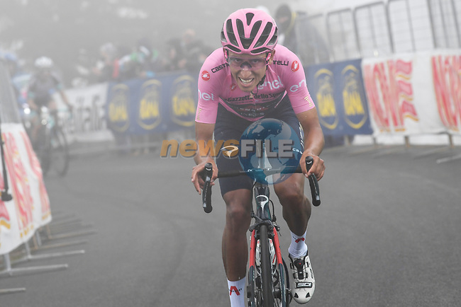 Race leader Egan Bernal (COL) Ineos Grenadiers on the slopes of Monte Zoncolan during Stage 14 of the 2021 Giro d'Italia, running 205km from Cittadella to Monte Zoncolan, Italy. 22nd May 2021.  <br /> Picture: POOL/Tim De Waele | Cyclefile<br /> <br /> All photos usage must carry mandatory copyright credit (© Cyclefile | POOL/Tim De Waele)