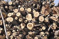 - Abbiategrasso (Mi), impianto per lo sfruttamento di biomasse (legname di scarto) per la produzione di energia elettrica, acqua calda per il teleriscaldamento e pellets (combustibile ecologico)....- Abbiategrasso (Mi) plant for exploitation of biomass (wood waste)  to produce electricity, hot water for district heating and pellets (ecological fuel)