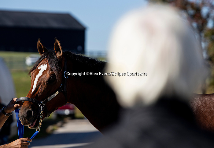 November 4, 2020: Trainer Bob Baffert looks over Maximum Security after workouts at Keeneland Racetrack in Lexington, Kentucky on November 4, 2020. Alex Evers/Eclipse Sportswire/Breeders Cup