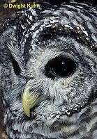 OW01-044b  Barred owl - showing eyes and beak - Strix varia