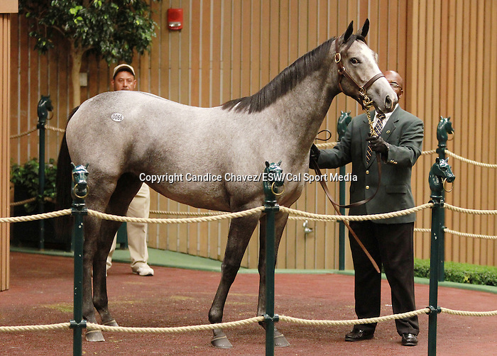 September 08, 2014:Hip #66 Tapit - Mayan Milagra filly consigned by Woodford Thoroughbres sold for $700,000 to Spendthrift Farm at the Keeneland September Yearling Sale.  Candice Chavez/ESW/CSM