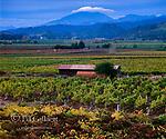 Autumn Vineyards, Mt. St. Helena, Oakville, Napa Valley, California
