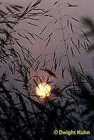 SU17-001z  Sun back lighting grasses