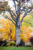 Fall color on Orchard Way Silver Spring MD Autumn in Maryland Early Morning Mist