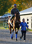 October 29, 2015:  American Pharoah arrives at Keeneland for the Breeder's Cup Classic.  American Pharoah trained by Bob Baffert, and owned by Zayat Stables, entered in the Breeder's Cup Classic Grade 1 $5,000,000.  Candice Chavez/ESW/CSM