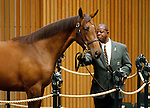 September 16, 2015: Hip 555 War Front - Refugee filly consigned by Eaton Sales.  Candice Chavez/ESW/CSM