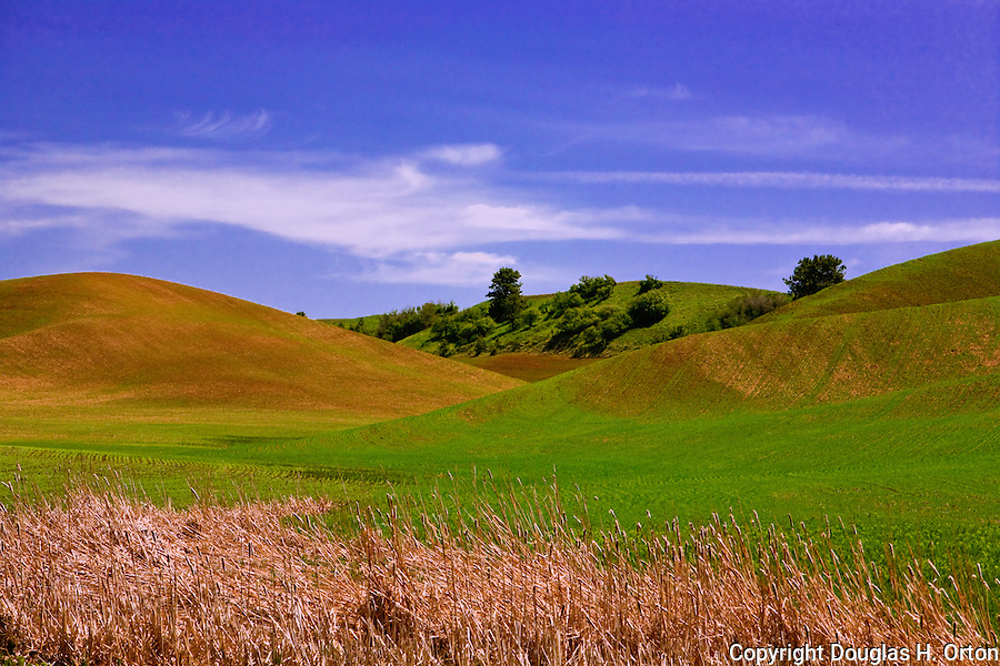 Landscape along Almota Road between Colfax and Almota on the Snake River in Washington's famous Palouse farming country, rich in landscapes for photographers, painters, and just plain sightseers.  Palouse Scenic Byway.