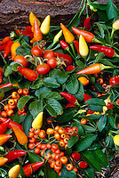 Peppers, tomatoes, and rosehips