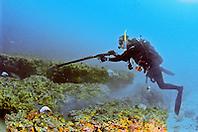scuba diver, spearfishing, off Tampa, Florida, USA, Gulf of Mexico, Caribbean Sea,  Atlantic Ocean, Model Released - MR#: 000010