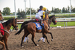 September 19, 2020: #3 Shirl's Speight, ridden by Kazushi Kimura and trained by Roger Attfield heads to the post for the Grade 1 Ricoh Woodbine Mile at Woodbine Racetrack in Toronto, Ontario, Canada.