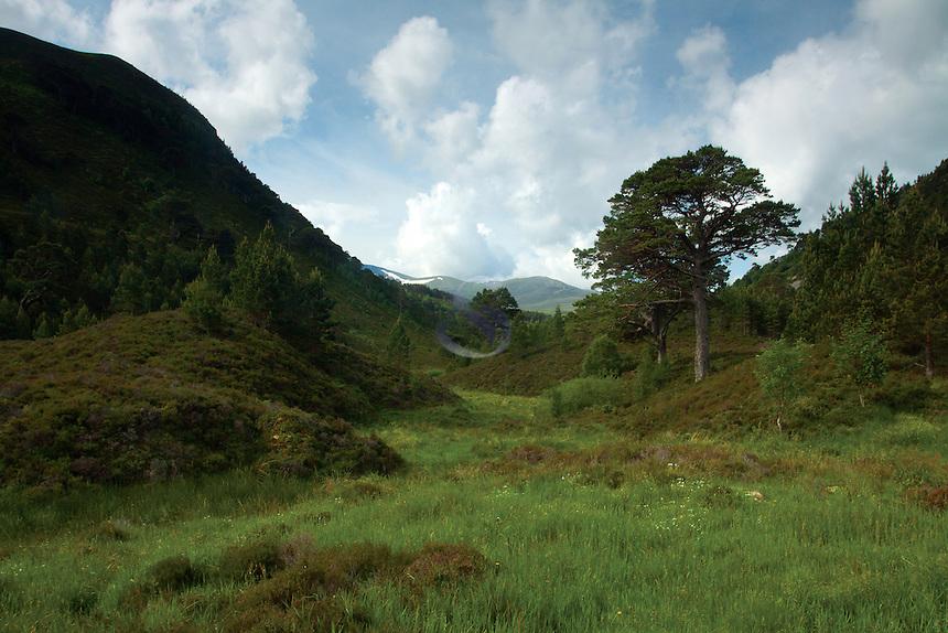 Glen More, Glenmore National Nature Reserve, Cairngorm National Park, Badenoch & Speyside