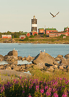 Flora and fauna on a summer's morning at Norrskär Lighthouse in the Gulf of Bothnia, Finland