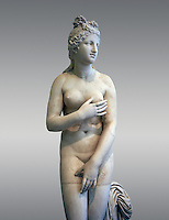 2nd century AD Roman marble sculpture of Aphrodite (Venus), 'Dresden Capitoline Type, copied from a Hellanistic Greek original,  inv 6238, Museum of Archaeology, Italy, grey background