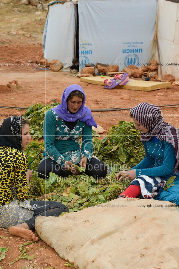 LEBANON Deir el Ahmad, camp for syrian refugees, women work as saisonal worker, tobacco harvest and drying / LIBANON Deir el Ahmad, Camp fuer syrische Fluechtlinge am Dorfrand, Frauen arbeiten als Erntehelfer, Tabakernte und Trocknung, links Najah Mansour