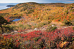 Fall foliage on Acadia's coastal mountains, Acadia National Park, ME, USA