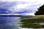 Minus tide on Puget Sound beach.