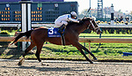 November 3, 2018 : Audible #3, ridden by Javier Castellano, wins the 1st running of the Qatar Cherokee Run Stakes on Breeders Cup World Championships Saturday at Churchill Downs on November 3, 2018 in Louisville, Kentucky. Bill Denver/Eclipse Sportswire/CSM