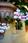 Hanging pink flowers