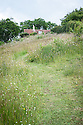 View up towards house from wildflower meadow, Fairlight End, Pett, East Sussex, late June.
