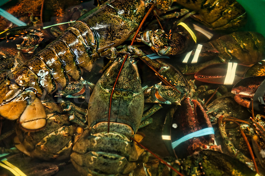 Live lobster in seafood market.