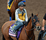 ARCADIA, CA - NOV 01: American Gal, owned by Kaleem Shah, Inc. and trained by Bob Baffert, exercises in preparation for the Breeders' Cup 14 Hands Winery Juvenile Fillies at Santa Anita Park on November 1, 2016 in Arcadia, California. (Photo by Scott Serio/Eclipse Sportswire/Breeders Cup)