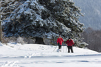 Europe/France/Franche-Comté/25/Doubs/env de Pontarlier: Ski de fond au sommet du Larmont // France, Doubs, Near Pontarlier:Cross-country skiing at the top of Larmont<br /> Auto N°: 2013-106 et Auto N°: 2013-107