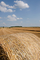 19-7-2021 Round bales of Barley straw<br /> ©Tim Scrivener Photographer 07850 303986<br />      ....Covering Agriculture In The UK....
