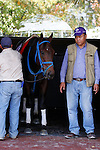 October 23, 2015:  Mongolian Saturday schools in the paddock, trained by Enebish Ganbat, and owned by Mongolian Stable, is entered in the Breeder's Cup Turf Spring.  Candice Chavez/ESW/CSM