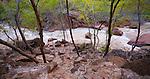 Tree lined stream, Zion National Park, Utah, USA