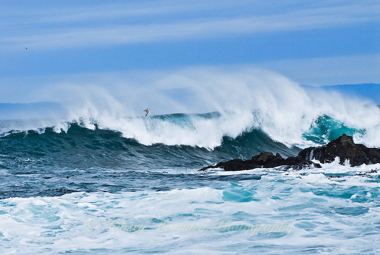 """""""WIND IN THE WAVES""""<br /> <br /> The onshore winds kick up spindrifts on the winter waves on the California Coast. If you look closely you will see a lone seagull flying along the crest."""