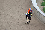 APRIL 30, 2015: Mubtaahij, trained by Mike de Kock, exercises in preparation for the 141st Kentucky Oaks during morning workouts at Churchill Downs in Louisville, Kentucky. Ting Shen/ESW/Cal Sport Media